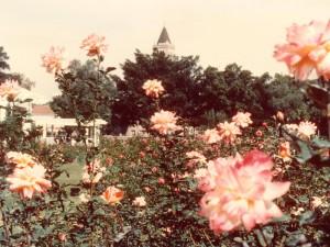 ロサンゼルスの薔薇園