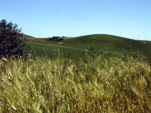 カリフォルニアの草原